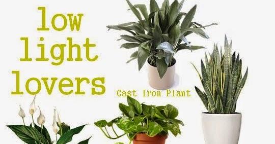 Low Light Loving Houseplants Plants 101 Gardening