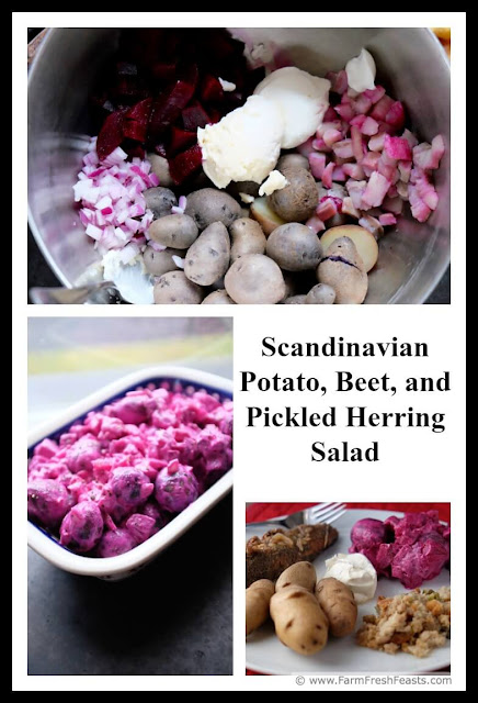 A recipe for roasted beets and blue potatoes from the farm share, mixed with pickled herring chunks and red onion in a festive holiday salad.