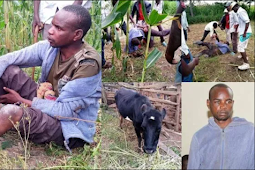 I Like B*ng!ng With Cows Because Women Can Give Me HIV – Man Caught P@nts Down Having S*x With Neighbour's Cow
