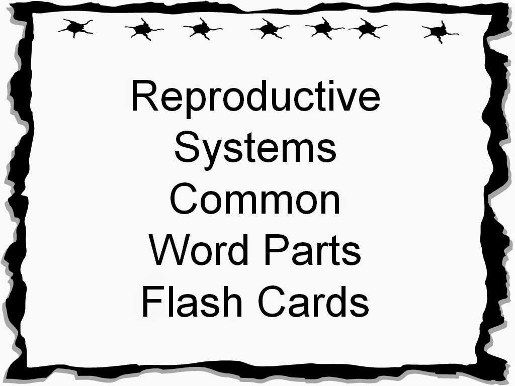 Student Survive 2 Thrive: Reproductive Systems Common Word