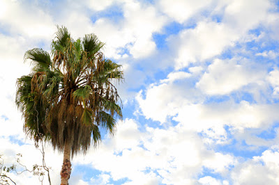 Palm Tree, Blue Sky, and Clouds - California Photography by Mademoiselle Mermaid