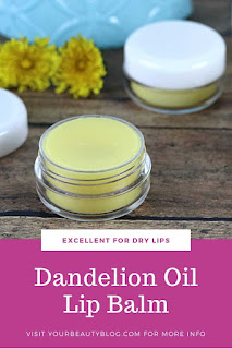 How to make DIY dandelion lip balm.  Use dandelion infused oil for the best homemade lip balm recipe.  This lip balm recipe has shea butter and beeswax to moisturize dry lips.  Home made lip balm with just three ingredients.  Make a natural lip balm recipe for dry or chapped lips.  Natural lip balm without yucky ingredients.  #lipbalm #dandelion