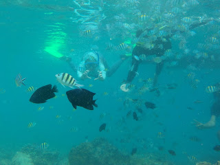 snorkling di Pulau payung