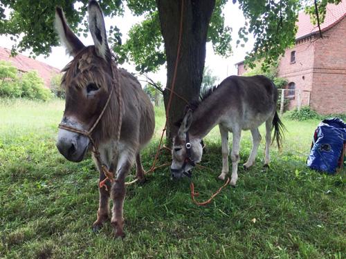 Eselwandern, Uckermark, Annette Diepolder, Urlaub