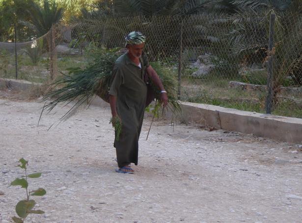 omanita al wadi shab