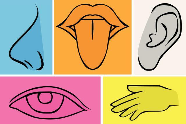 Conozcan como explicarle los 5 sentidos a los niños