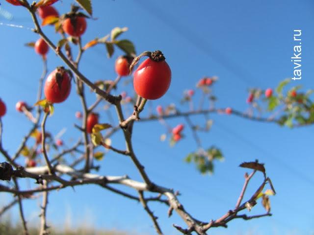 занятие для детей про ягоды