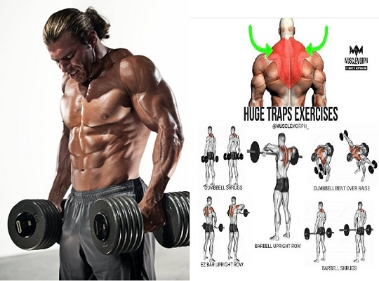 Build Traps Like Mountains with  Best Workout