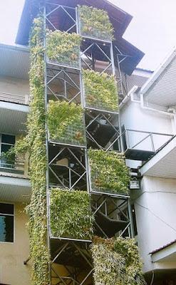 Tukang Taman Vertikal Surabaya | Vertical Garden 8