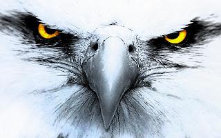 عالم الحيوان اجمل اشكال وانواع النسور فى العالماجمل صور نسور - النسر Eagleأكبر أنواع النسور في العالم صور نسر , اجمل صور نسور خيال , النسر Eagle أحلي خلفيات النسور والبوم صور كامل يحتوي علي  خلفيات النسور بأشكالها وانواعها المختلفة، النسور في صور طبيعية مميزة جدا.خلفيات حيوانات وطيور, صور نسور، صورة نسر، صور النسر صور وخلفيات النسور صور متعددة ومنوعة النسور فى العديد من المواقف فى الجوgolden eagle,اجمل الصور للنسور, قوة النسر, مجموعة خلفيات للنسور, صور لشكل النسر, . معلومات عن النسور  , صور نسور  , عالم الحيوانات والطيور