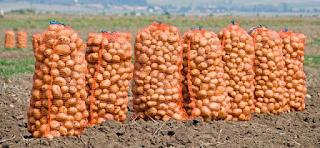 Αγρότης χωρίς γη εισέπραξε εκατ. ευρώ – Σκύλοι, γάτες και πρόβατα έτρωγαν τόνους κρεμμύδια