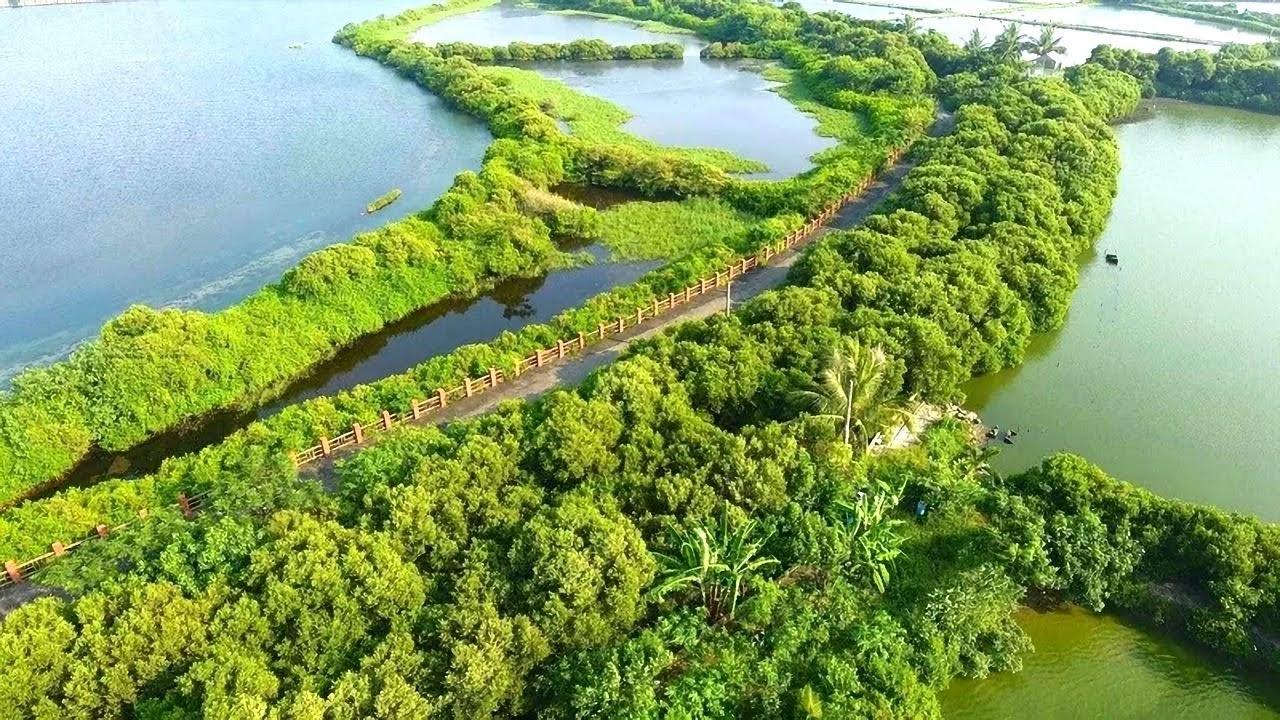 四鯤鯓紅樹林 離世台南舊市區最近的自然地景