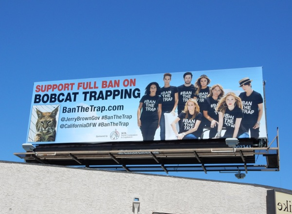 Support full ban on Bobcat trapping billboard