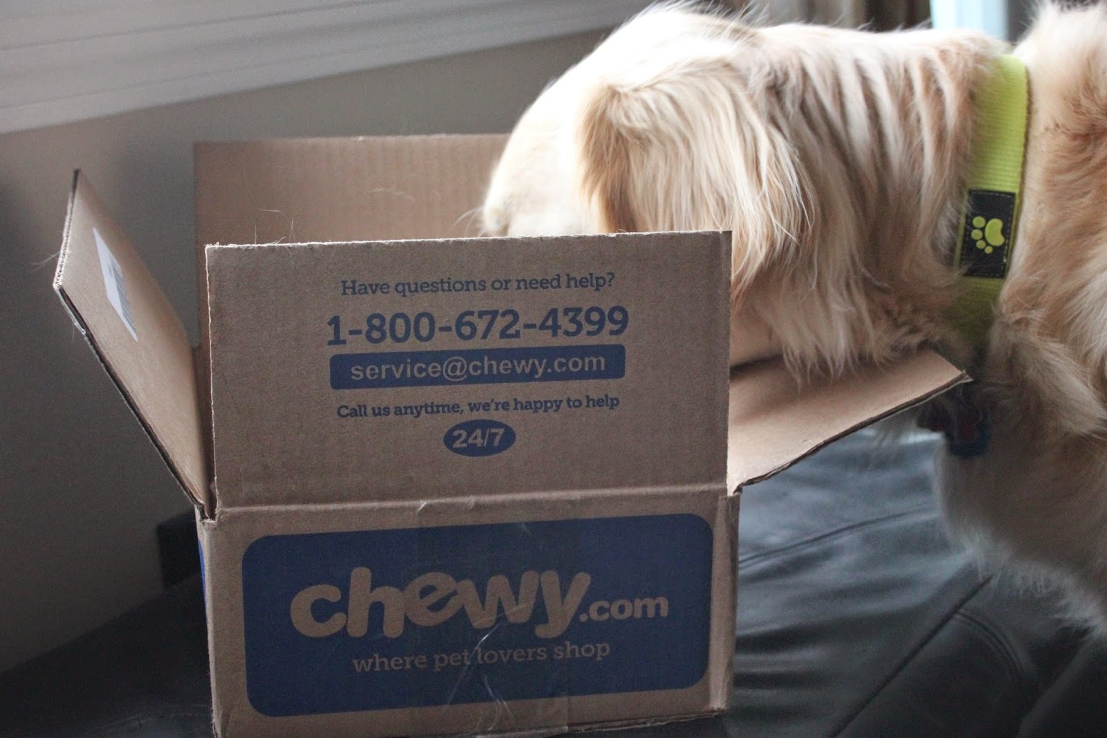 chewy.com review, online pet store, dog treats