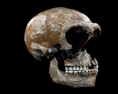 Isotope studies reveal Neanderthals were primarily meat eaters