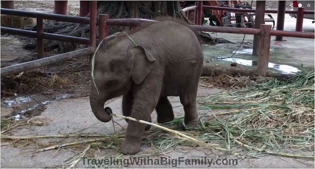 Why you should not ride the elephants in Ayutthaya