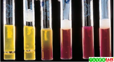 Reactions in oxidative fermentation media. Left to right: Fermenter: open and sealed tubes positive for acid production; nonfermenter: open tube positive for acid production, sealed tube negative for acid production; nonfermenter/nonoxidizer: open and sealed tubes negative for acid production.