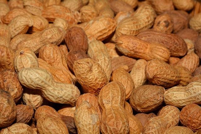 Cara Budidaya Kacang Tanah Untuk Pemula