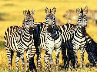 Animal HD Wallpapers