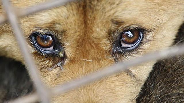 Abandono e maus tratos de animais é crime, mas uma prática comum em Pinhal