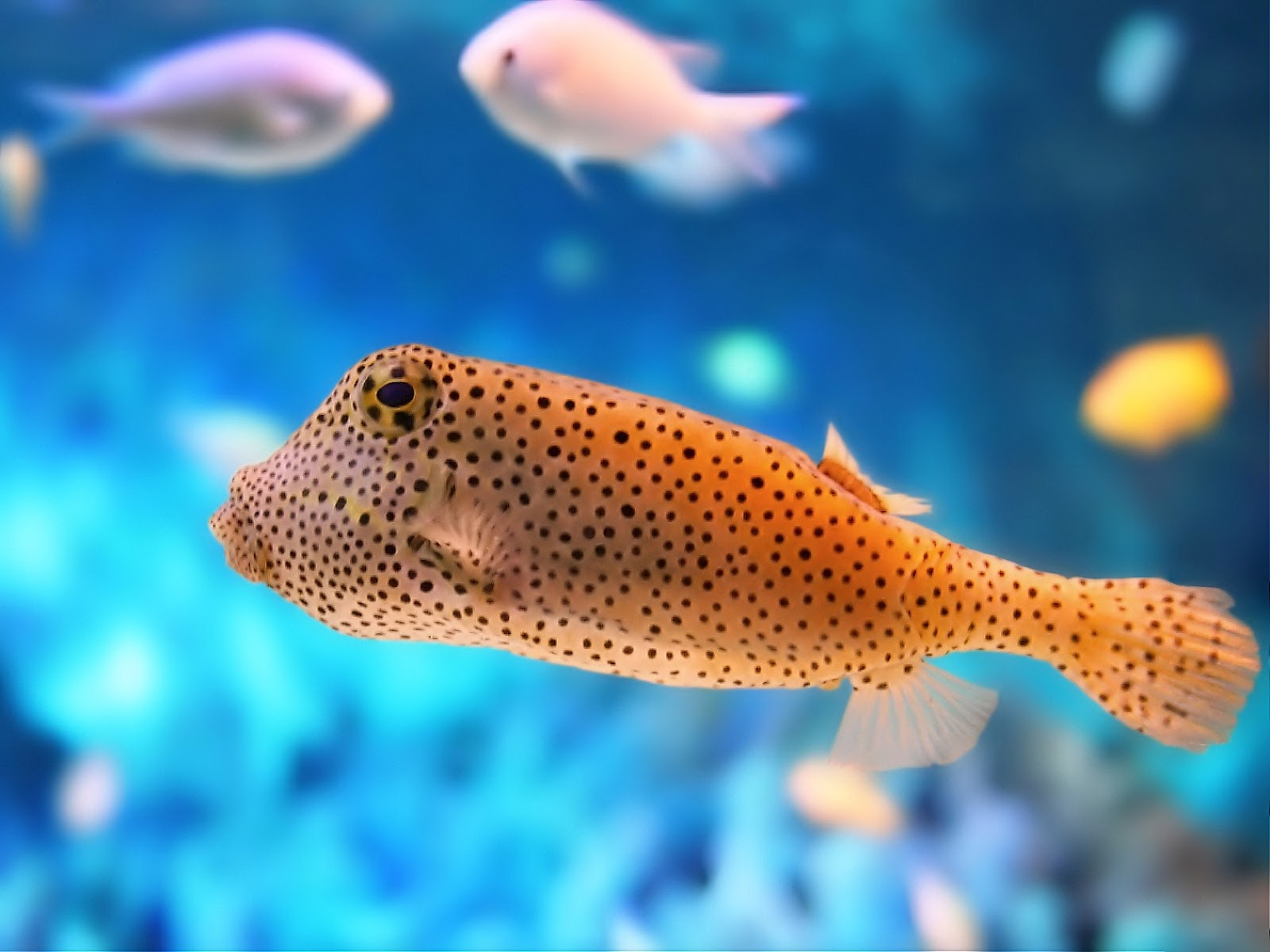 Fish HD Wallpapers - Amaxing