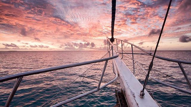 Safari at sea