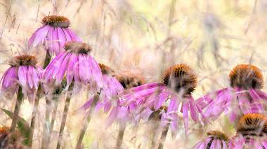Fotos de plantas premiadas en IGPOTY N.11. Snap 'Square Crop'