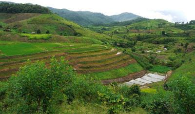 thailand tourism nan pu tiger