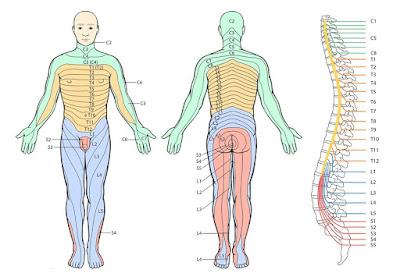 Los dolores en la espalda a la arena en los riñones