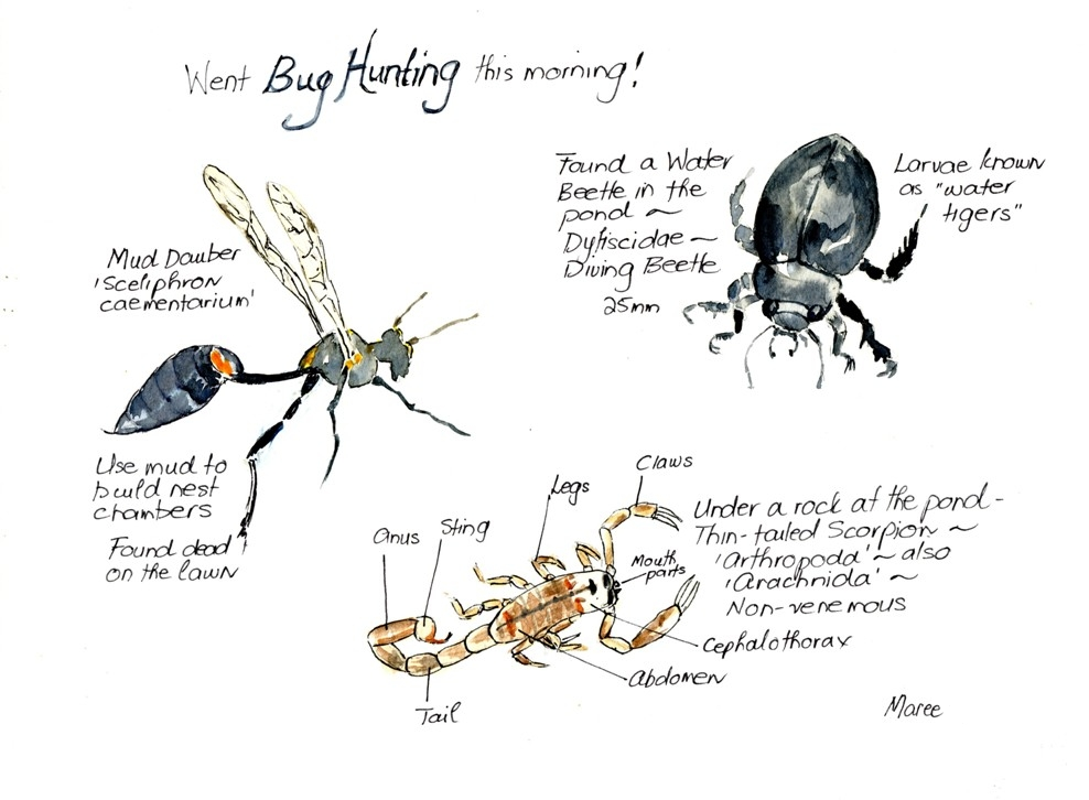 Hedgie's Nature Journal : Bug hunting