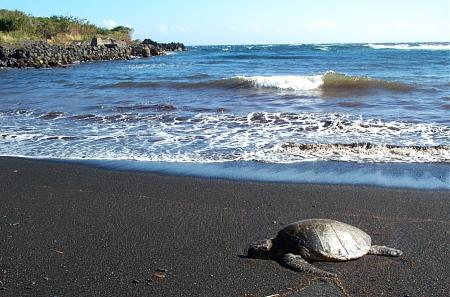 Three Colorful Beaches in Hawaii - Tourism Update