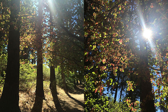 lake arrowhead, fall colors, fall, heaps peak