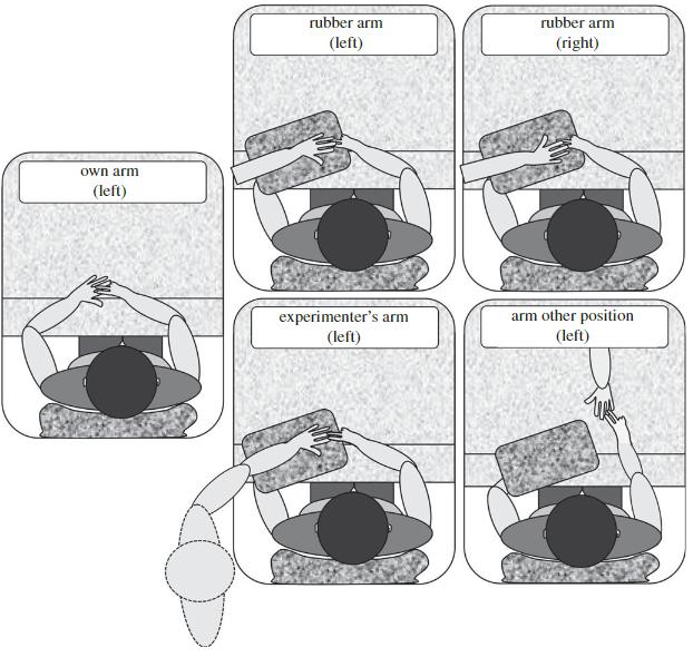 図:セルフタッチと身体表象