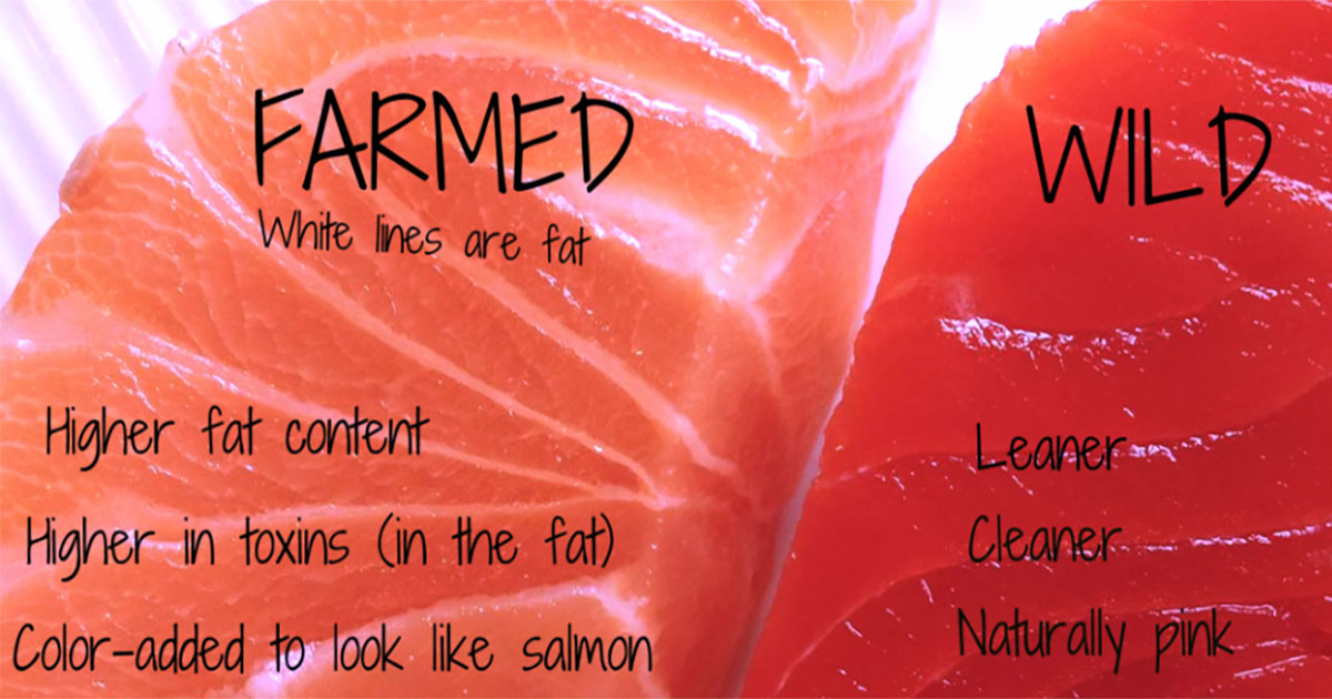 Farmed wild Salmon