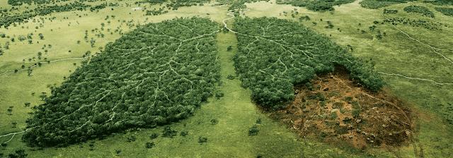 How Many Trees Do We Need? thumbnail
