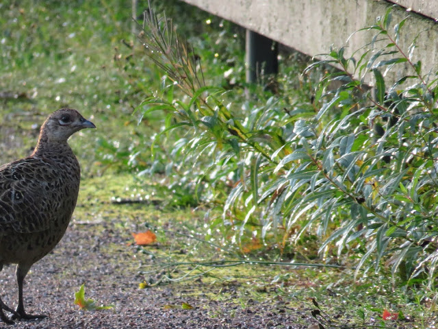 Quail at Hamina Bastion on a FInland road trip itinerary