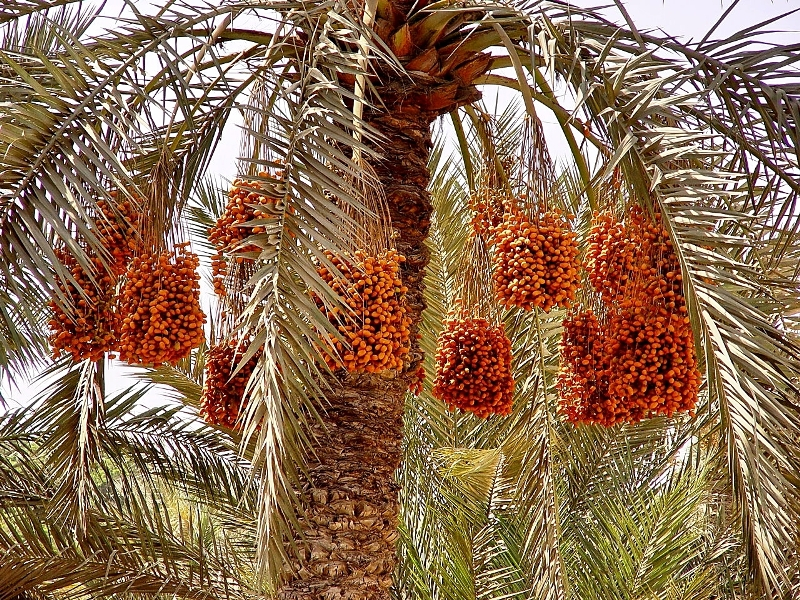 Fruit Names Mentioned In Qur 39 an