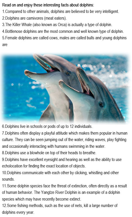 Facts about dolphins for kids | Childhood Education