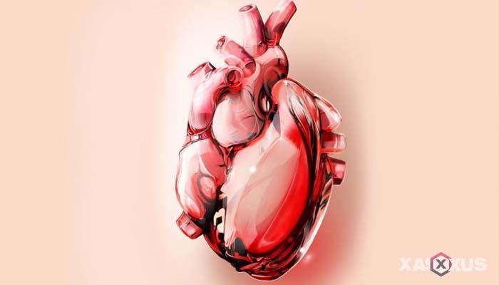 Fakta 5 - Jantung pada janin 9 minggu mulai dapat bekerja lebih sempurna