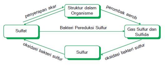Daur sulfur (Belerang)
