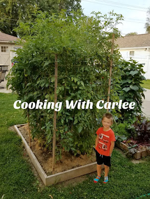 Little Dude standing next to super tall tomato plants