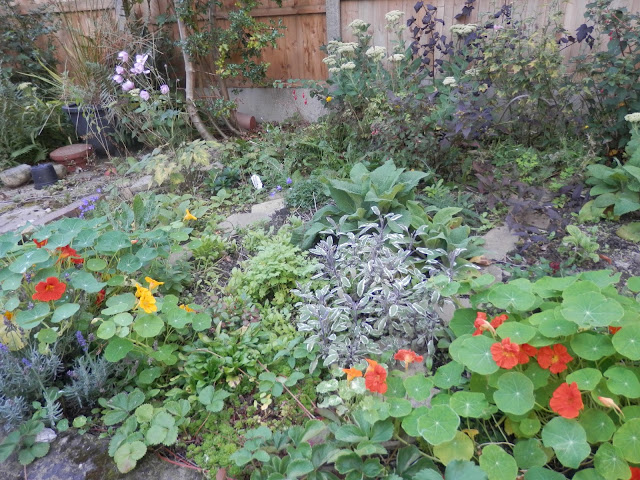 Diary of a suburban edible garden, August 2017. From UK garden blogger secondhandsusie.blogspot.com #garden #suburbangarden #ediblegarden #permaculturegarden #suburbanpermaculture