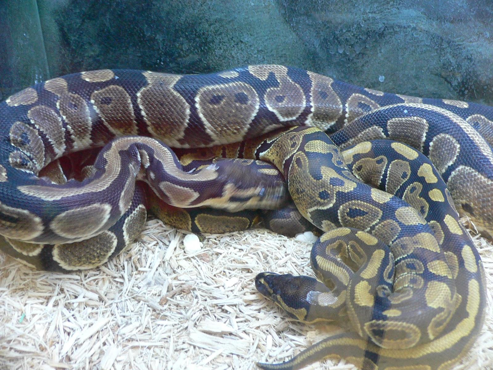 snake - photo #26