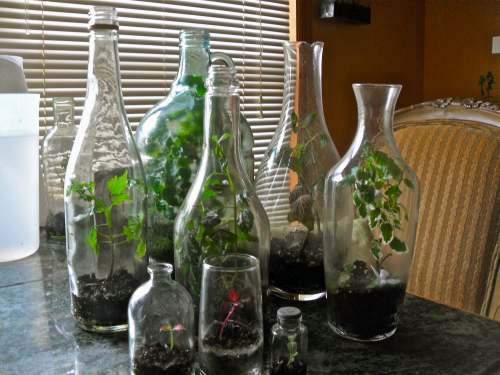 Designing Life Let S Play With Dirt Let S Make Terrarium