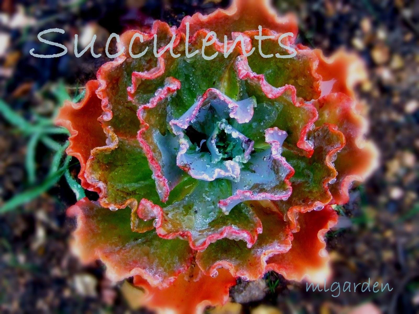 Garden Design Ideas: Sucessful Succulent Gardening on garden designs zone 6, garden designs zone 3, garden designs zone 7,