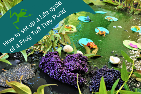 Pond Tuff tray with frogs and frog spawn