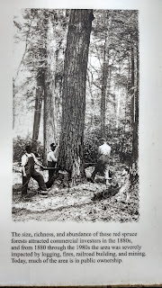 logging West virginia appalachia restoration red spruce lambert's strip