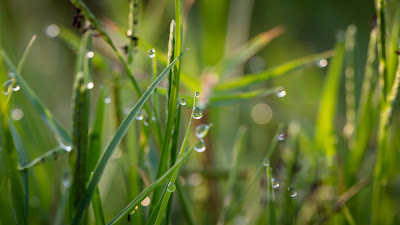 grass with water drops hd resolution wallpaper