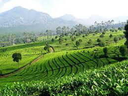 Villa Istana bunga dekat dengan perkebunan teh sukawana