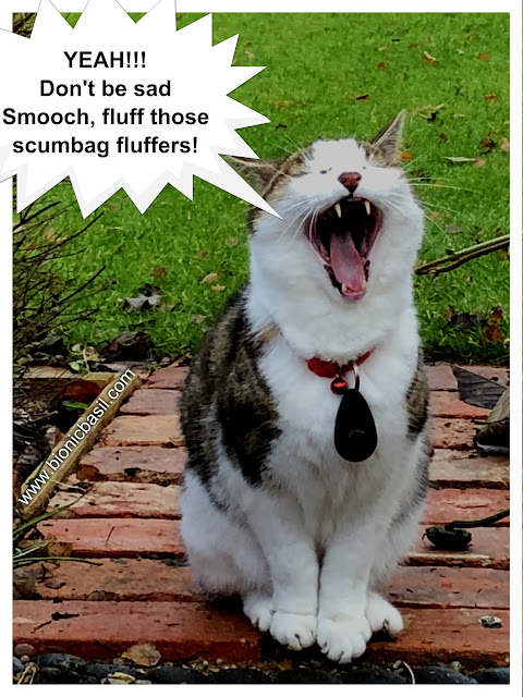 YEAH Don' be sad Smooch fluff those scumbag fluffers said Wing Commander Basil @BionicBasil® The Pet Parade